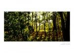 Фото  Carl Zeiss ZEISS Otus 1.4/55 ZF.2 - объектив с байонетом Nikon + светофильтр Carl Zeiss T* UV Filter 77 mm в подарок!!!