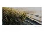 Фото  Carl Zeiss ZEISS Loxia 2/50 + светофильтр Carl Zeiss T* UV Filter 52 mm в подарок!!!