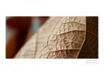 Фото  Carl Zeiss ZEISS Milvus 2,0/50M ZE - объектив с байонетом Canon + светофильтр Carl Zeiss T* UV Filter 67 mm в подарок!!!